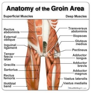 pain in the groin d